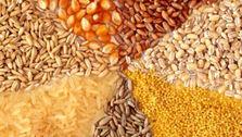 بازار با کمبود نهاده مواجه است؛ وزارت کشاورزی در صدور مجوز تاخیر می کند