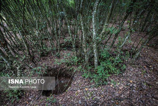 تاراج خاک جنگلهای شمال/ هر ۱۰ کیلوگرم ۲۰ هزار تومان!