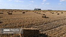 قیمت خرید تضمینی گندم در شورای قیمتگذاری اصلاح میشود