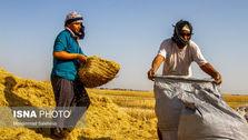 کشاورزان محصولات تولید شده خود را در بازار آزاد به کسانی می فروشند که حاضرند هزینه بیشتری بپردازند و اگر دولت نتواند با بازار آزاد گندم رقابت کند سال آینده در خرید گندم با مشکل مواجه خواهد شد