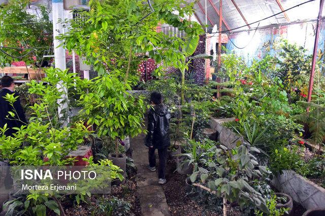 بیش از ۱۳ هزار هکتار گلخانه فعال داریم/ رتبه پنجم ایران در تولید گل و گیاه زینتی در آسیا