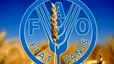 فائو: قیمت جهانی مواد غذایی افزایش یافت