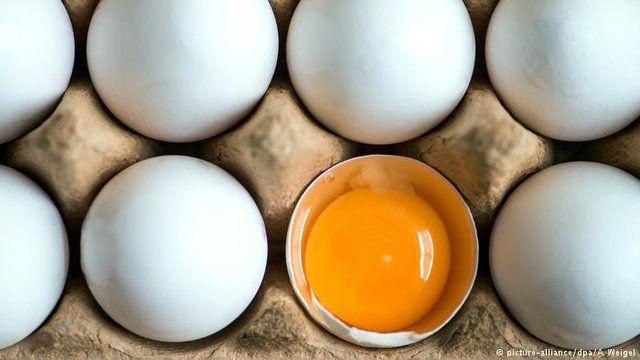 تخم مرغ چرا گران شد؟