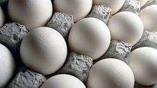 درج قیمت بر روی تخم مرغ/خودکفایی ۸۵ درصدی در تولید کره