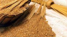 واردات گندم فعلاً متوقف شد
