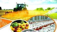 رشد مثبت کشاورزی و منفی صنعت تا پایان پاییز