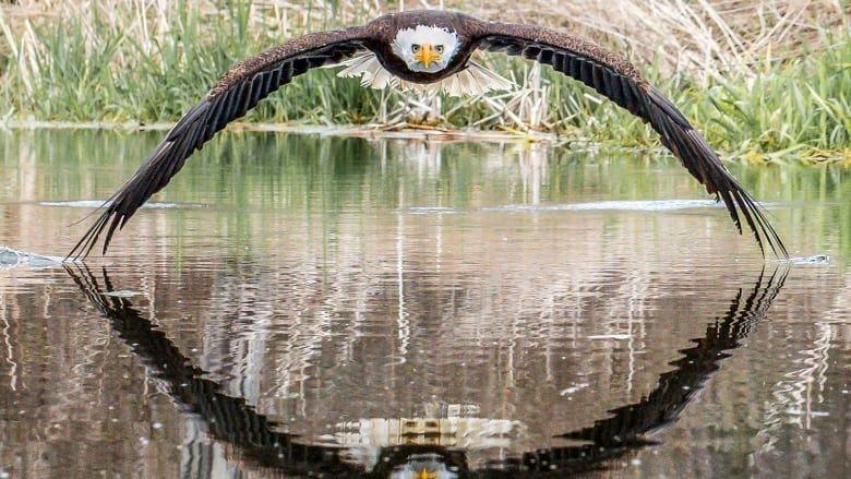 عکسی که یک عکاس آماتور را یک شبه معروف کرد