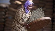 قهوه اندونزی اعتبار قهوه جنوب شرق آسیا