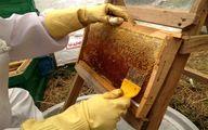 زنبورداران: از ما برای انتقال کندوهای عسلمان کد رهگیری نخواهید، ما دائم در حال کوچ به این منطقه و آن منطقه ایم