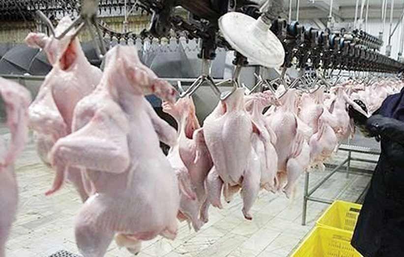 هشدار به تولیدکنندهها: مرغ ارزان نشود واردات میکنیم
