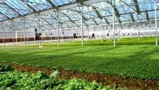 بهرهبرداری از 55 طرح کشاورزی در استان مرکزی