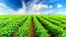 یک کارشناس کشاورزی عنوان کرد : نبود ثبات در تولید و توزیع محصولات کشاورزی از جمله موضوعاتی که کشور همواره با آن دچار مشکل بوده است.