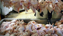 قیمت مرغ ارزان نخواهد شد / هر کیلو مرغ ۱۱ هزار تومان
