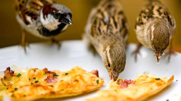 بحران ضایعات غذایی وخیمتر شد